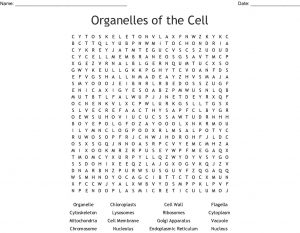 Cell Organelle Word Search