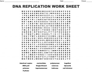 DNA Replication Word Search