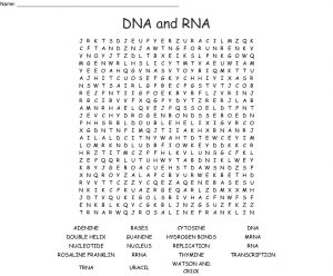 DNA and RNA Word Search