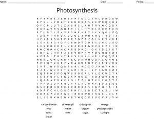 Photosynthesis Word Search Picture